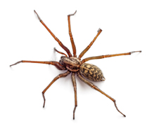 Pest Control Problems