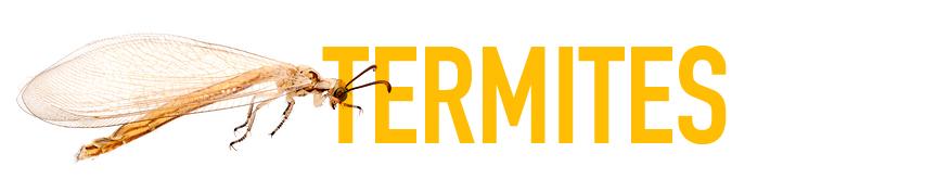 termites-evansville